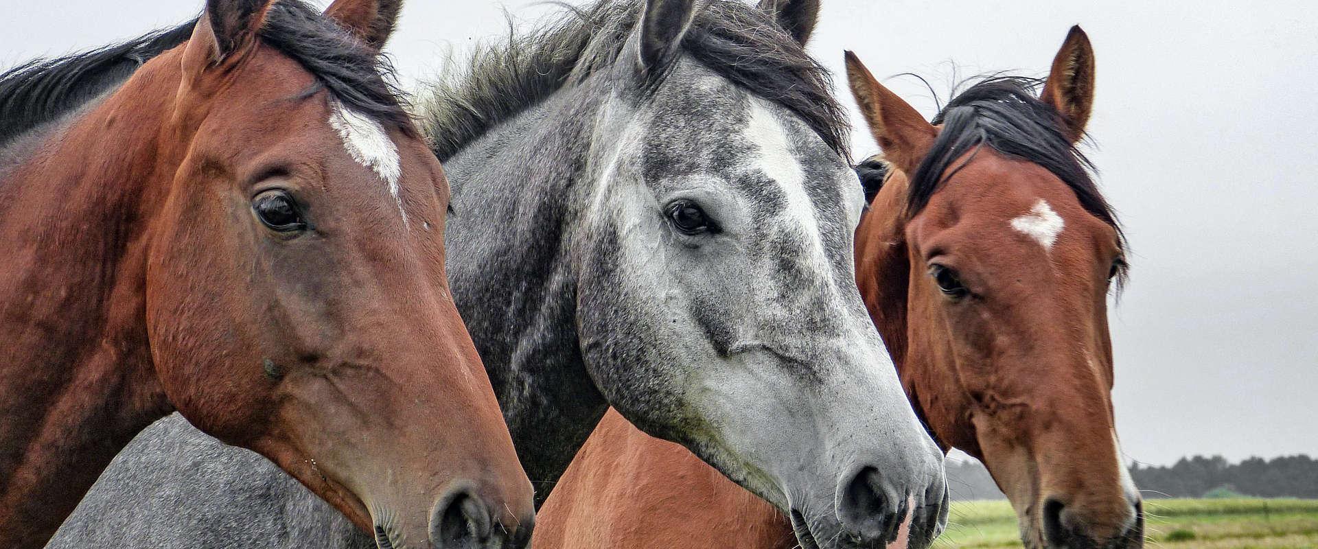 Assurance pour animaux, prix et information