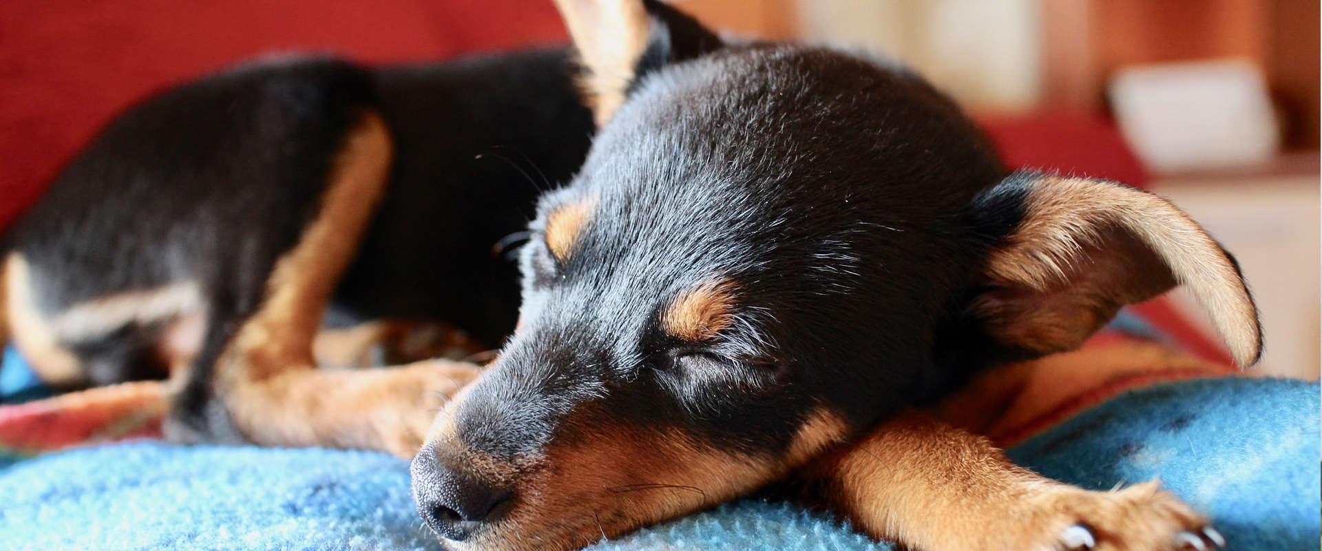 Garderie et pension pour les animaux