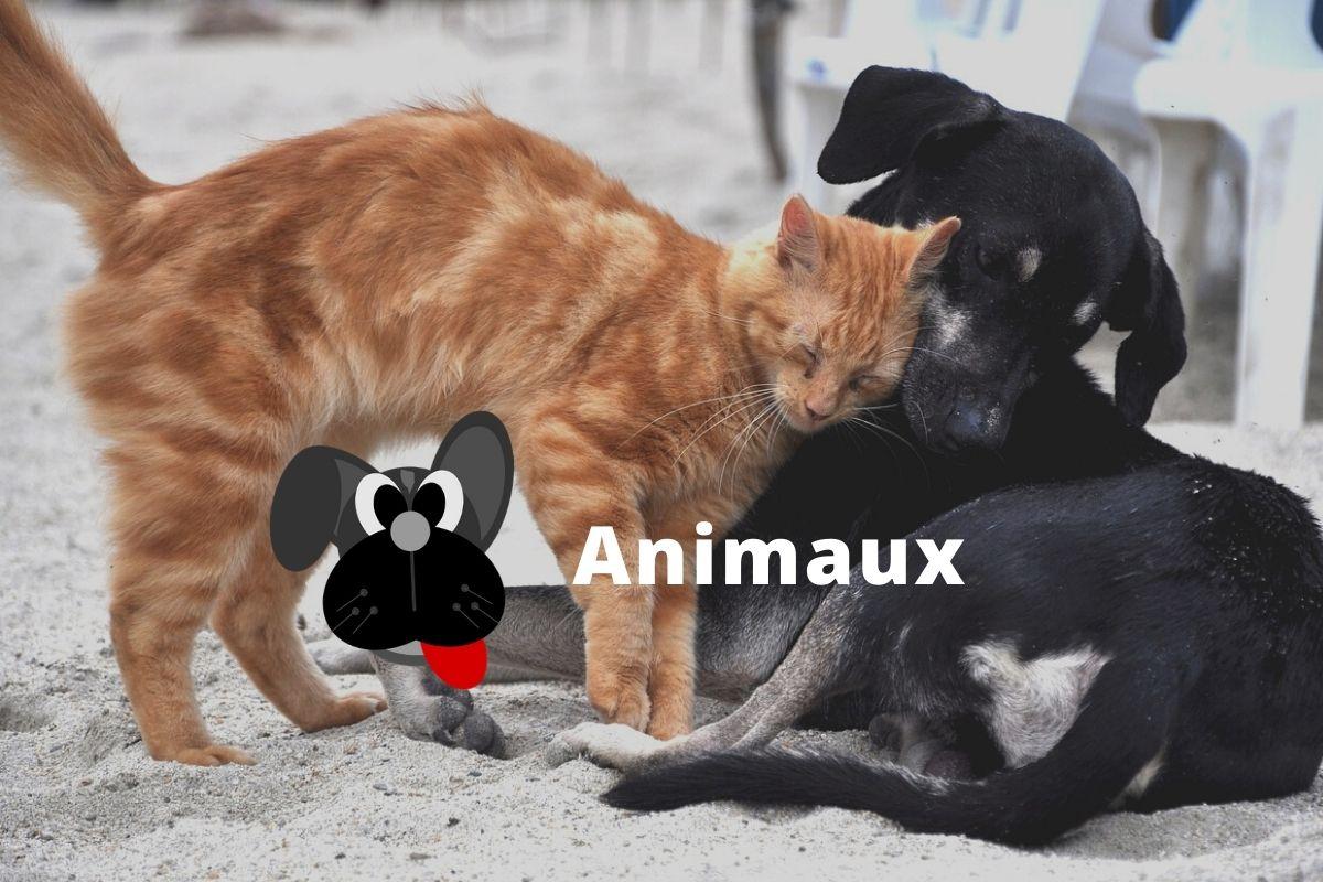 Tout sur les animaux au Québec