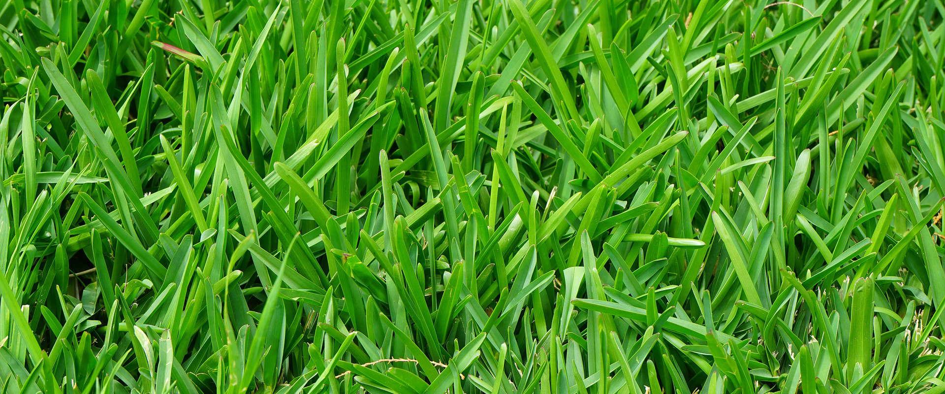 Prix pour traitement de la pelouse